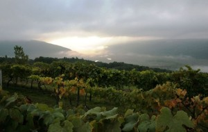fingerlakes_morning_grapes__612x388